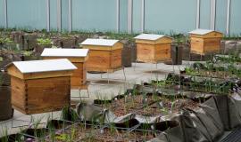 La safranière et le rucher de l'IMA. © Nicolas Hamel