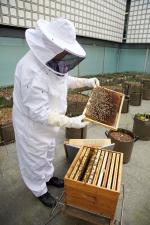 L'un des apiculteurs de l'IMA © Nicolas Hamel
