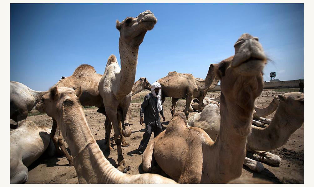 © UNAMID
