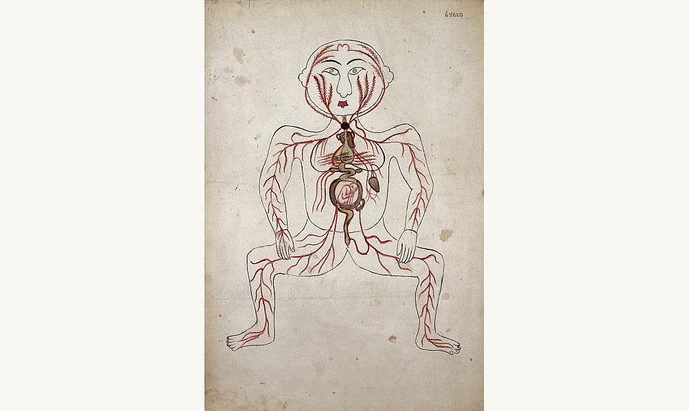 Planche anatomique montrant le système des artères et un fœtus dans le ventre maternel. Cette image provient probablement d'une copie d'un traité d'anatomie de Mansur, écrit au XIVe siècle. Iran, XIXe siècle, Londres, Wellcome Library. IMA