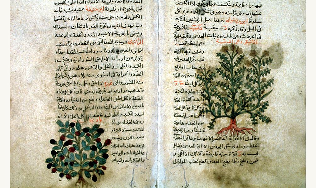 Page du Traité sur les vertus des plantes du médecin al-Ghafiqi, qui vécut en Espagne au XIIe siècle. IMA